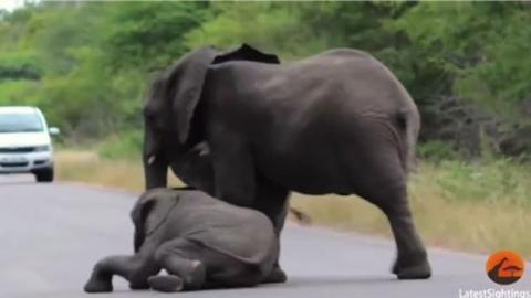 Ein schöner Beweis dafür, dass es auch im Tierreich Emotionen wie Liebe, Treue, Mitleid, Solidarität und Liebe gibt