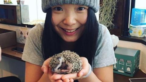 In Japan hat das erste Igel-Café eröffnet und macht jetzt Furore