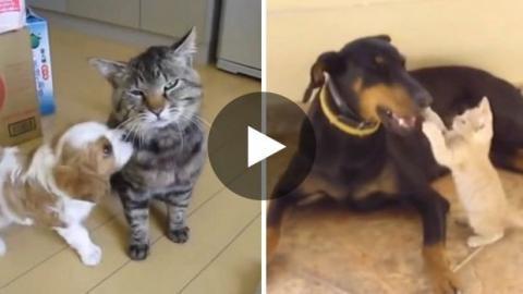 Diese Hunde und Katze treffen zum ersten Mal aufeinander - nicht immer ist es die große Liebe...