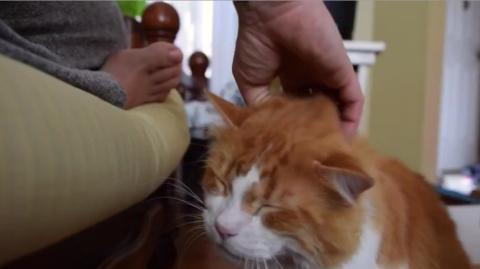 Diese Katze macht ein sehr ungewöhnliches Geräusch, wenn man sie streichelt