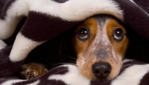 6 Tipps wenn euer Hund Angst vor Gewittern hat!
