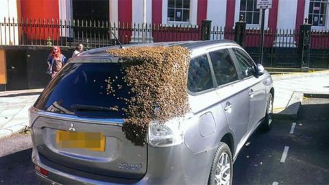 Dieser Autofahrer wird aus einem erstaunlichen Grund während 48 Stunden von einem Schwarm von 20 000 Bienen verfolgt