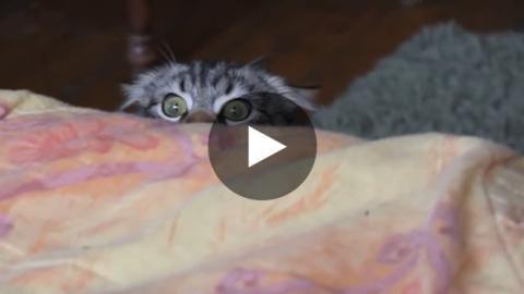 Diese Katze will nicht bemerkt werden.