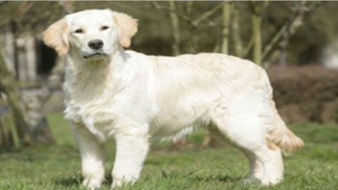 Dein Hund kann die Emotionen auf deinem Gesicht lesen!