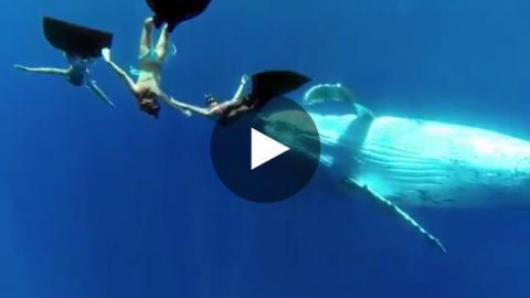 Taucher schwimmen mit Walen.