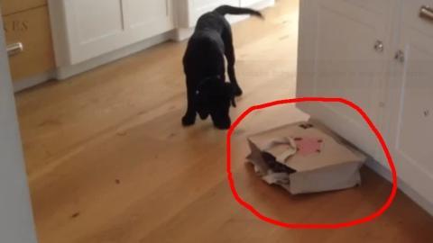 Dieser Hund will wissen, was in der Tüte ist... und hat die Angst seines Lebens!