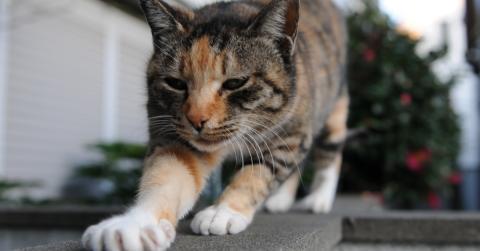 Milchtritt: Warum treteln Katzen mit den Pfoten?