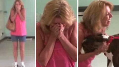 Frau bricht in Tränen aus, als sie ihren gelähmten Hund abholen will.