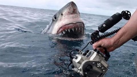 Australien: ein Kamerateam stößt plötzlich auf einen großen weißen Hai.