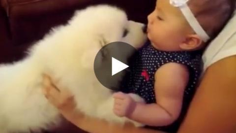 Ein Welpe und ein Baby sehen sich zum ersten Mal.