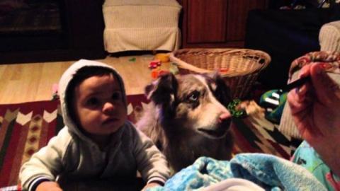 """Das Baby soll """"Mama"""" sagen... Aber guckt euch den Hund an"""