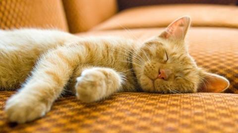 Warum und wie schnurren Katzen?