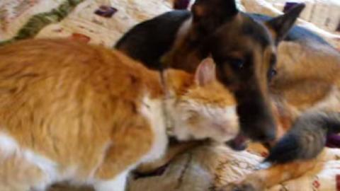 Welch ein Wiedersehen von Hund und Katze, nachdem die Katze 12 Tage lang verloren war!