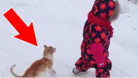 Diese Katze folgt dem Kleinkind mit umwerfenden Gefühlsbezeugungen im Schnee...