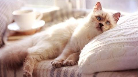 6 Dinge, die du tun kannst, um deine Katze glücklich zu machen
