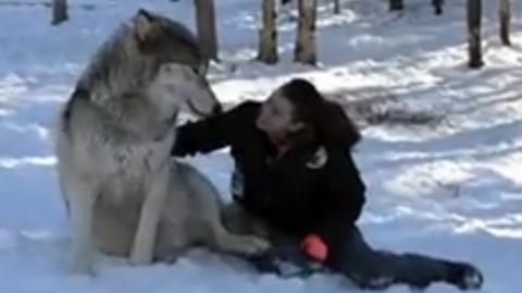 Sie hat eine unglaubliche Freundschaft mit einem riesigen Wolf