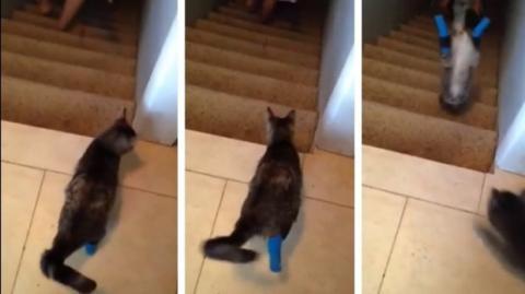 Diese Katze hat nur zwei Beine... doch läuft die Treppe hinunter, als wäre das ganz normal!