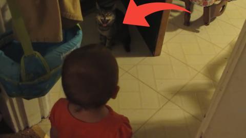 Ein Baby und eine Katze führen hier eine Art Unterhaltung. Herzallerliebst!