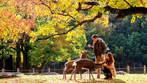 Diese Stadt in Japan ist ein wahrhaftiges Paradies für Hirsche