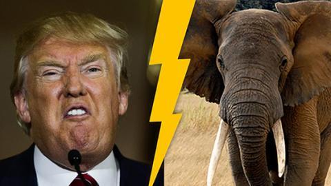 USA: Trump sorgt mit Entscheidung zu Elefanten-Trophäen für Kritik
