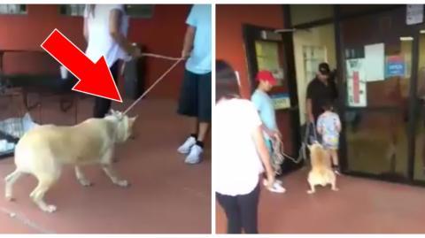 Eine Familie setzt ihren Hund aus, indem sie ihn gewaltsam an einer Leine zum Tierheim zieht
