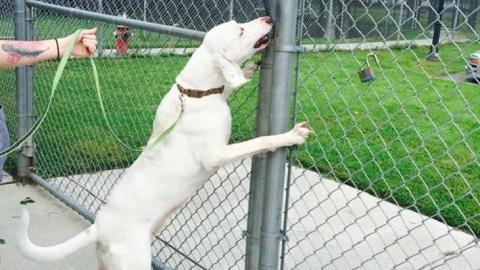 Dieser Hund wurde schon oft adoptiert. Doch aus diesem Grund kommt er immer wieder zurück ins Tierheim