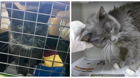 Ein Tierheim nimmt eine 23-jährige Seniorkatze auf... und findet ihr ein neues Zuhause!