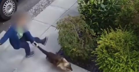 Kleiner Junge ärgert eine Katze, doch ihre Reaktion lässt nicht lange auf sich warten!