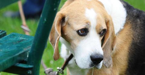 Tierschutzorganisation macht traurigen Fund bei einer Pflegefamilie für Tiere