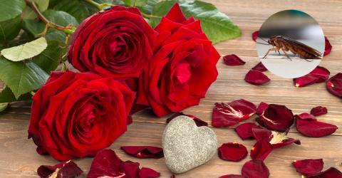 Das beste Valentinstag-Geschenk kostet nur zwei Euro und rächt dich an deinem Ex!