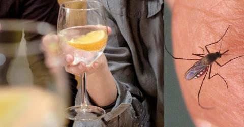 Wer dieses Getränk trinkt, ist sicher vor Mückenstichen!