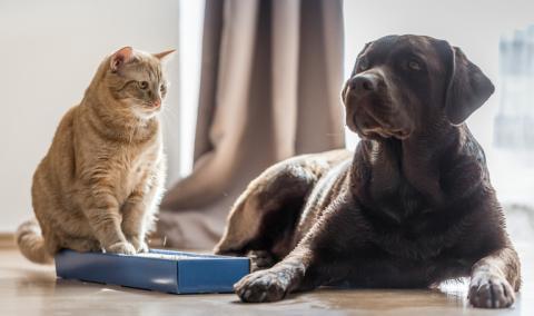 So funktioniert das Zusammenleben von Hund und Katze