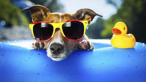 Heiße Temperaturen: So übersteht dein Vierbeiner die Hitze am besten