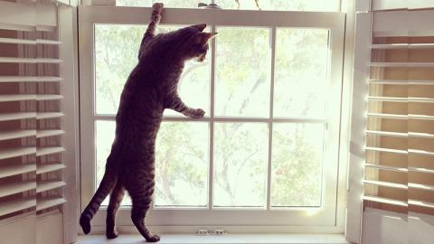 Aus diesem Grund sollte man Katzen niemals mit gekipptem Fenster alleine lassen