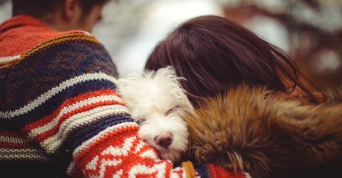So lieben wir unsere Haustiere zu Tode