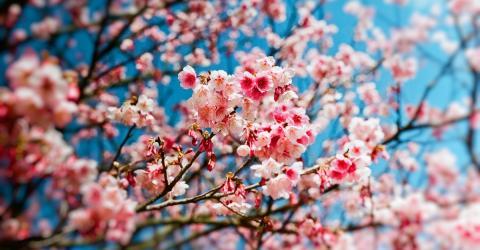 """Wissenschaftler warnen: Frühling könnte bald eine """"stumme Jahreszeit"""" sein. Das hat einen bestimmten Grund"""