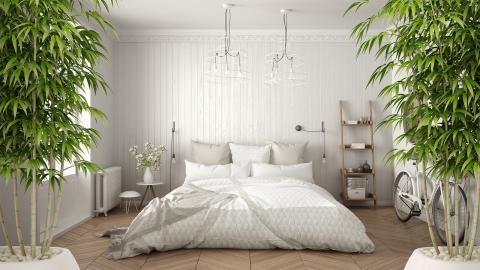 Schlafzimmer: Diese Pflanzen sorgen für einen besseren Schlaf