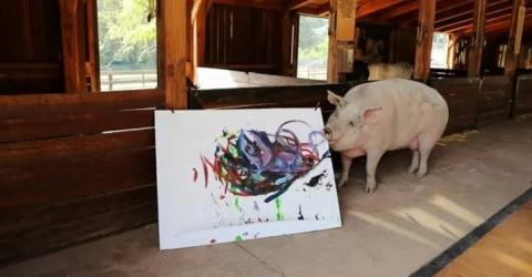 Pigcasso: Ein Bild von ihm kostet 4.000 Dollar