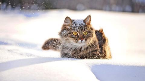 Der Winter ist da und draußen ist es kalt: So kümmerst du dich richtig um dein Haustier
