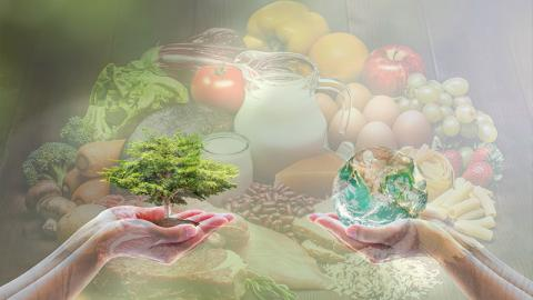 Mit diesem Ernährungsplan können wir unseren Planeten retten