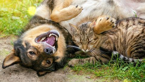 So erkennt ihr, ob euer Hund und/oder eure Katze an einem Hitzschlag leidet