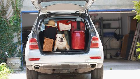 Wohin mit dem Haustier, während man im Urlaub ist?