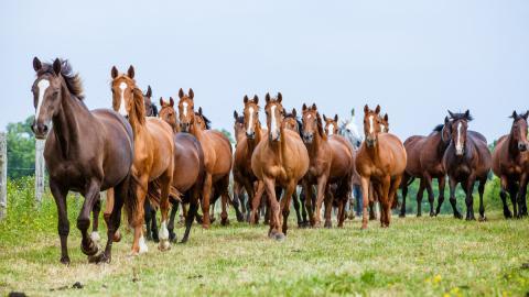 Welche Pferderasse passt zu deinem Sternzeichen?