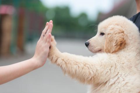 Das Ende der 7-Jahre-Regel: So alt ist mein Hund wirklich