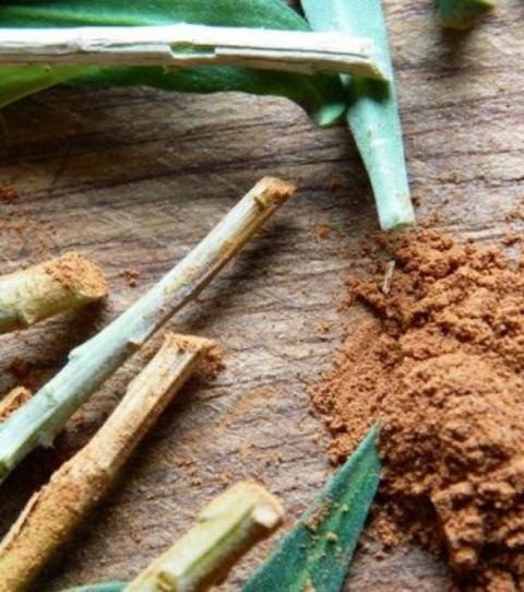 Zimt im Garten: Nützliche Tipps für deine Pflanzen