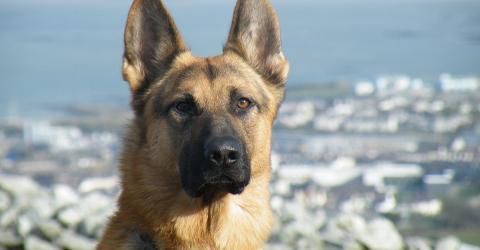 Sibirien: Polizei ermittelt nachdem Mann Schäferhund einfrieren wollte!