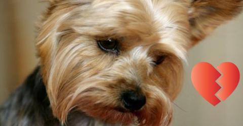 Nach dem Tod ihres Hundes wurde bei ihr das Broken-Heart-Syndrom festgestellt