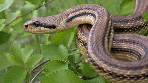 Hast du schon einmal von einer Schlange geträumt? Dann solltest du dir Sorgen machen!