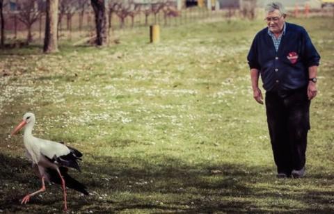 Seit dreizehn Jahren legt dieser Storch eine Entfernung von 13000 km zurück, um zu seinem geliebten Weibchen zurückzukehren
