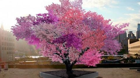 Wunderbaum trägt bis zu 40 verschiedene Obstsorten pro Jahr